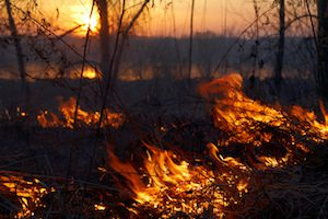 Natural Disaster Forest Fire