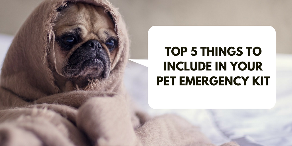 Top 5 Things To Include in Your Pet Emergency Kit