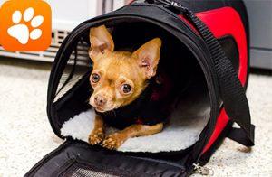 Pet Preparedness Emergency Preparedness Resources