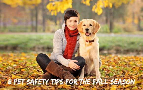 8 Pet Safety Tips for the Fall Season